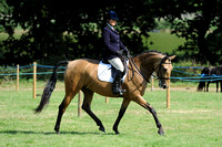 Class 48 - Pure or Part Bred Stallion, Mare or Gelding (7 years and under)