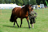 Class 31 - Hunter Brood Mare