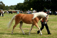 Class 82 - Champion Haflinger In Hand